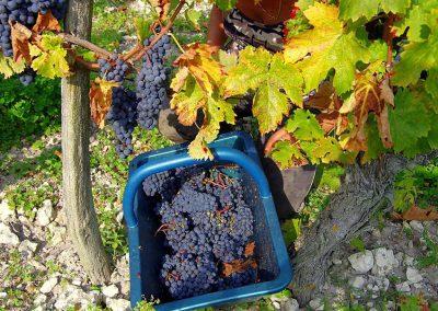 La vigne des Boulaies